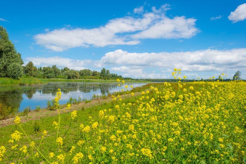 Orilla de un lago en humedal en verano imagenes de archivo