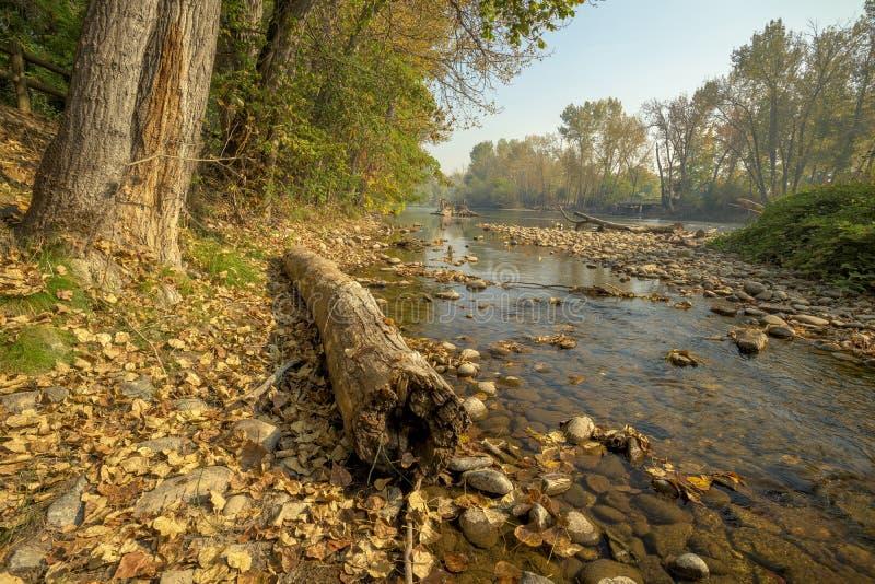 Orilla de un río de Idaho en otoño imágenes de archivo libres de regalías