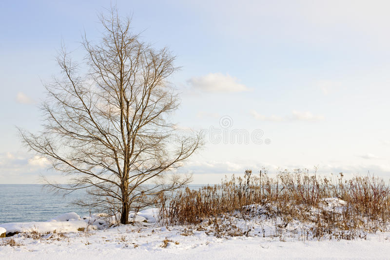 Orilla del invierno del lago Ontario fotografía de archivo libre de regalías