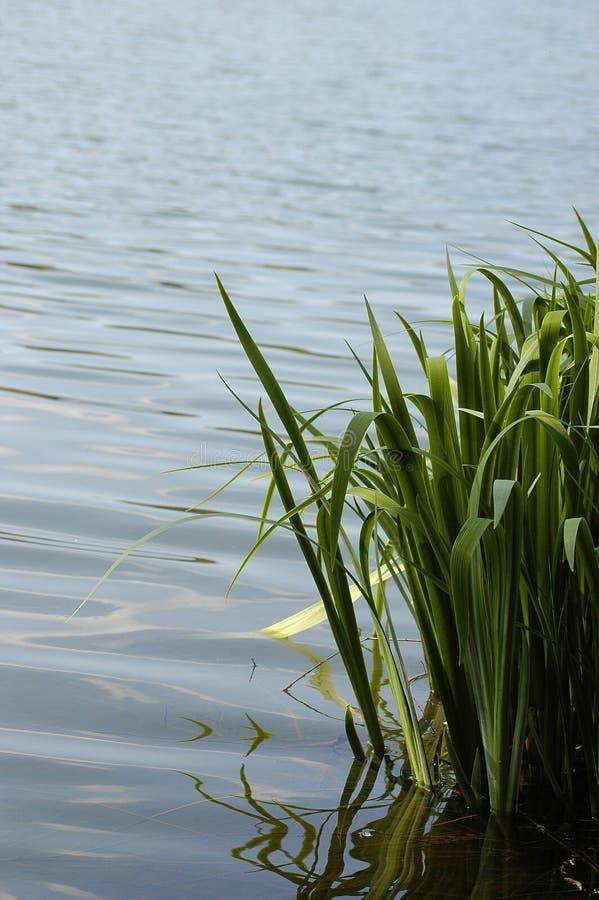 Orilla del lago fotos de archivo libres de regalías