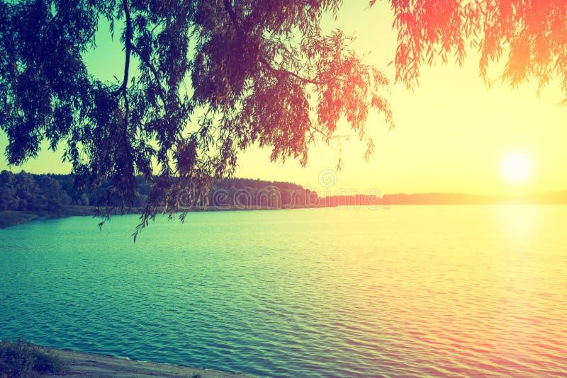 Orilla del lago con los árboles en la puesta del sol fotos de archivo