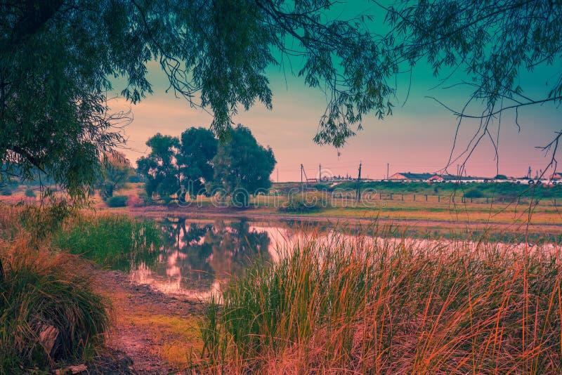 Orilla del lago con los árboles en la salida del sol fotografía de archivo