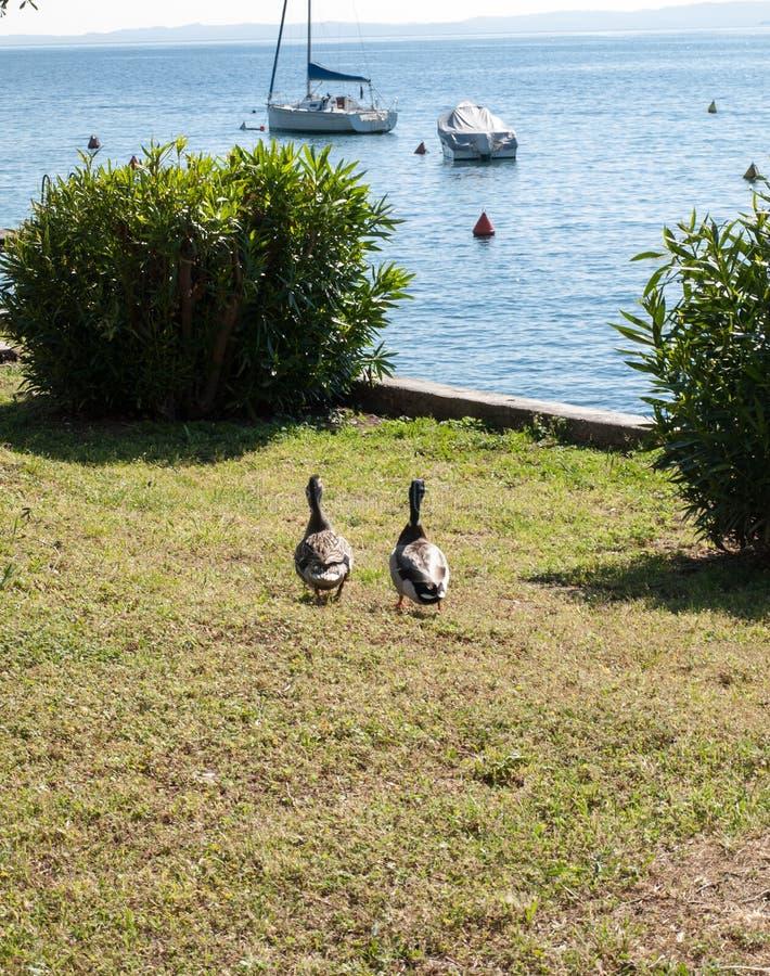 Orilla del lago Garda en el pueblo de Torri del Benaco en Italia fotos de archivo libres de regalías