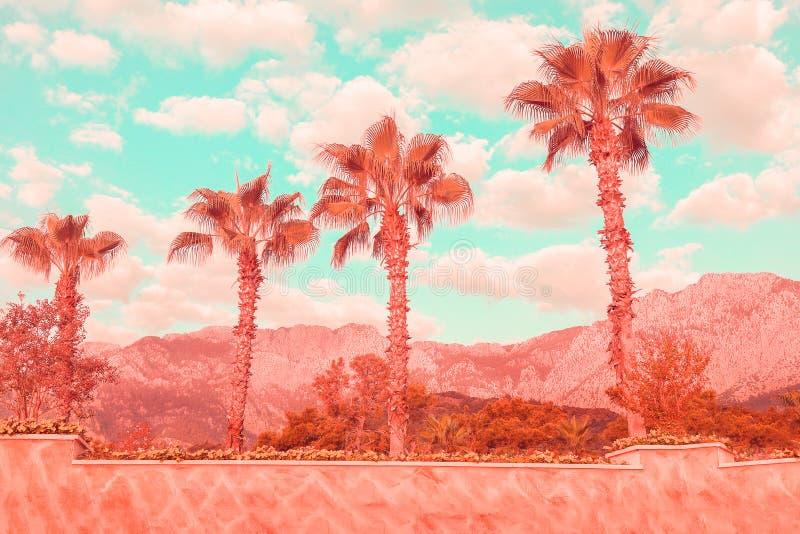 Orilla del mar con las palmas y el cielo tropicales coralinos de la turquesa imagen de archivo