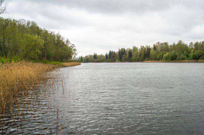 Orilla del río con las cañas imagenes de archivo