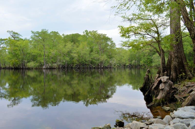 Orilla del río Forest Reflection, río negro NC fotos de archivo