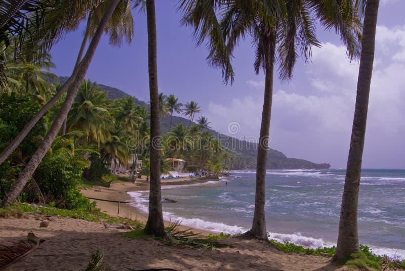 Orilla del sur, Puerto Rico fotos de archivo