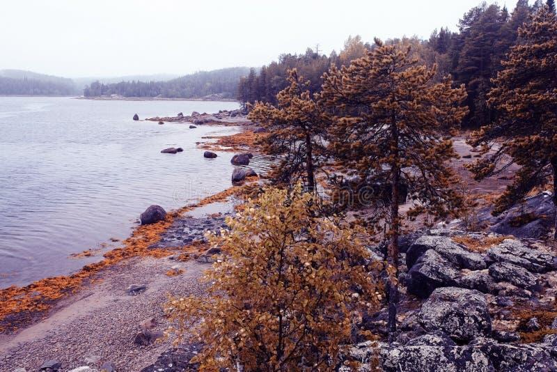 Orilla fría del lago imágenes de archivo libres de regalías