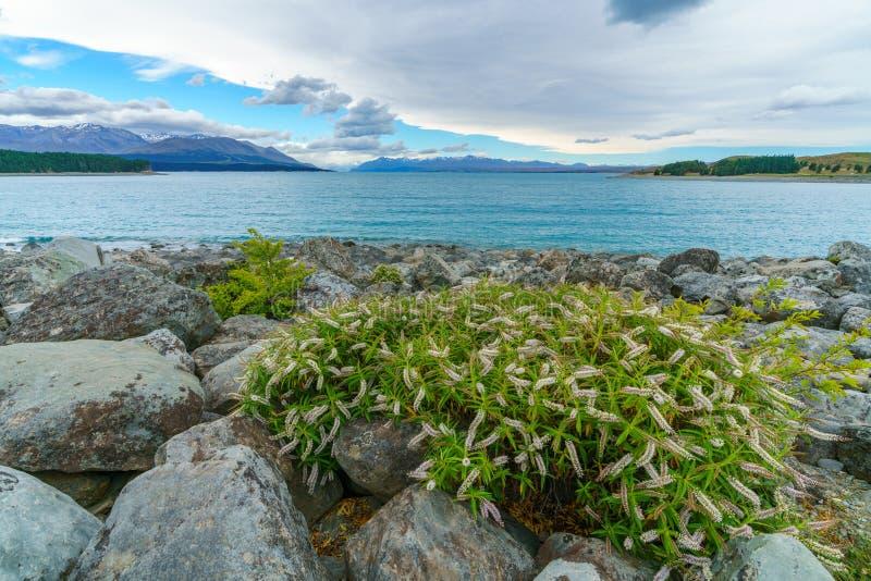 Orilla rocosa del tekapo del lago, Cantorbery, Nueva Zelanda 11 imágenes de archivo libres de regalías