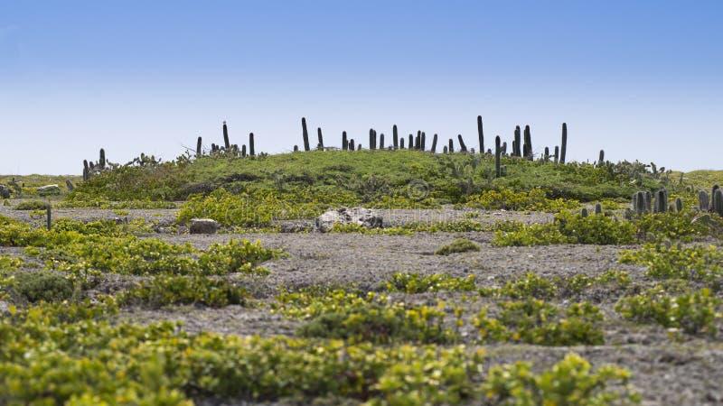 Orilla rocosa en Curaçao con el cactus foto de archivo