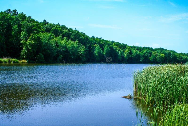 Orilla verde de un lago del verano imagen de archivo libre de regalías