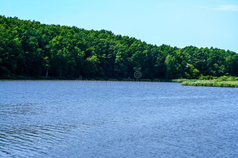 Orilla verde de un lago del verano fotos de archivo libres de regalías