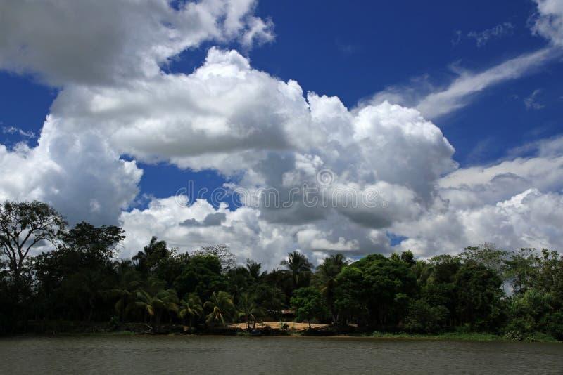 Orinoco River. Delta in Venezuela royalty free stock image