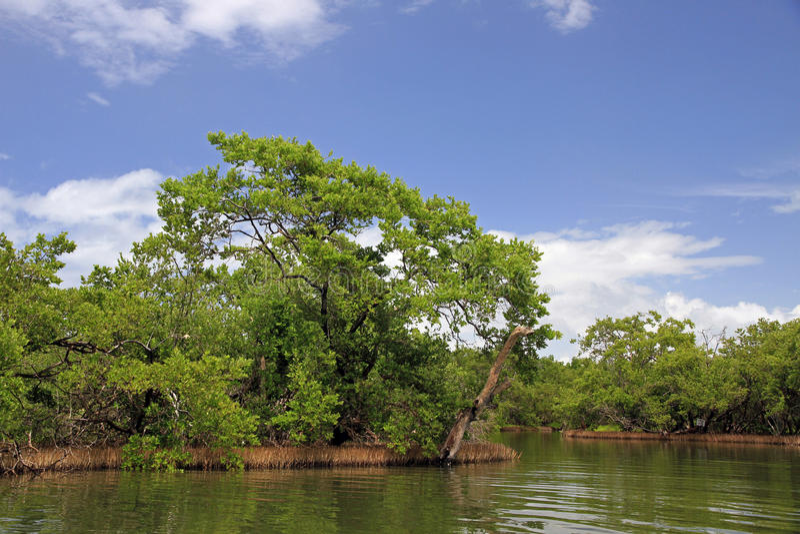 Orinoco River. Delta in Venezuela stock photo