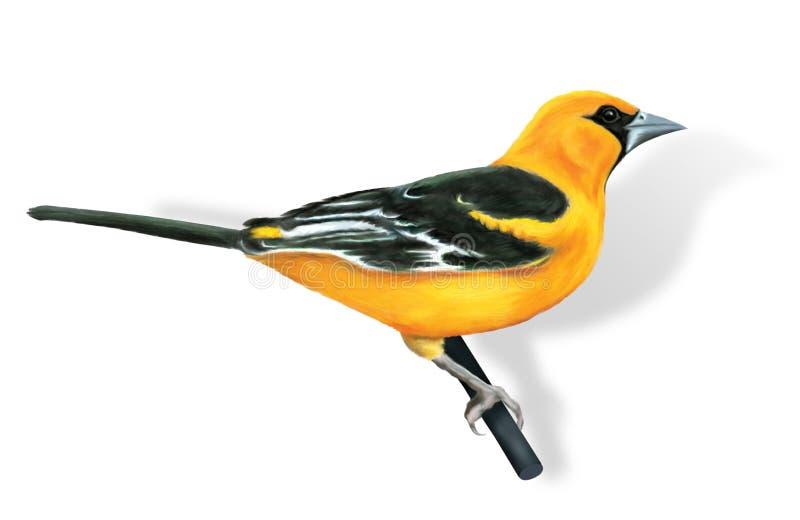 Oriole d'oiseau illustration libre de droits