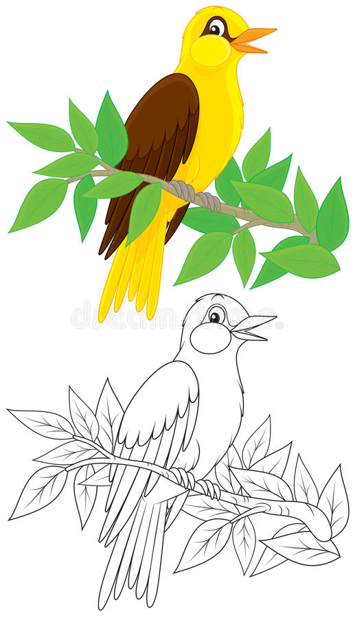Download Oriole stock vector. Illustration of vector, illustration - 35633467