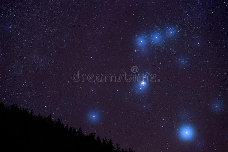 Orion Constellation au-dessus de forêt du Colorado images stock