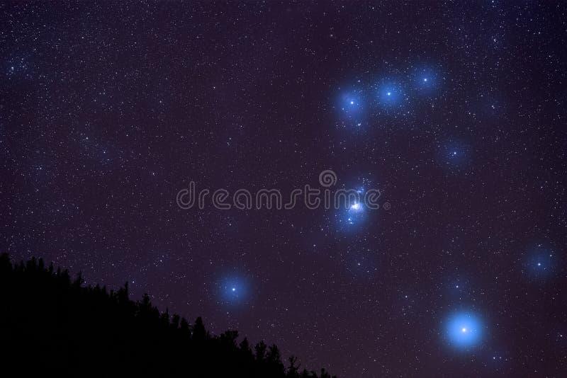 Orion Constellation sopra la foresta di Colorado immagini stock