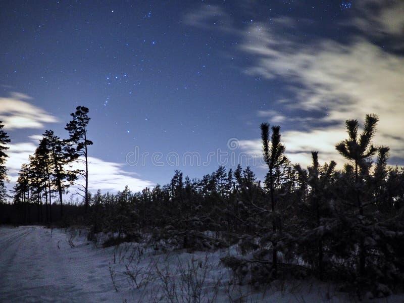 Orion för stjärnor för natthimmel konstellationer över vinterskog royaltyfria bilder