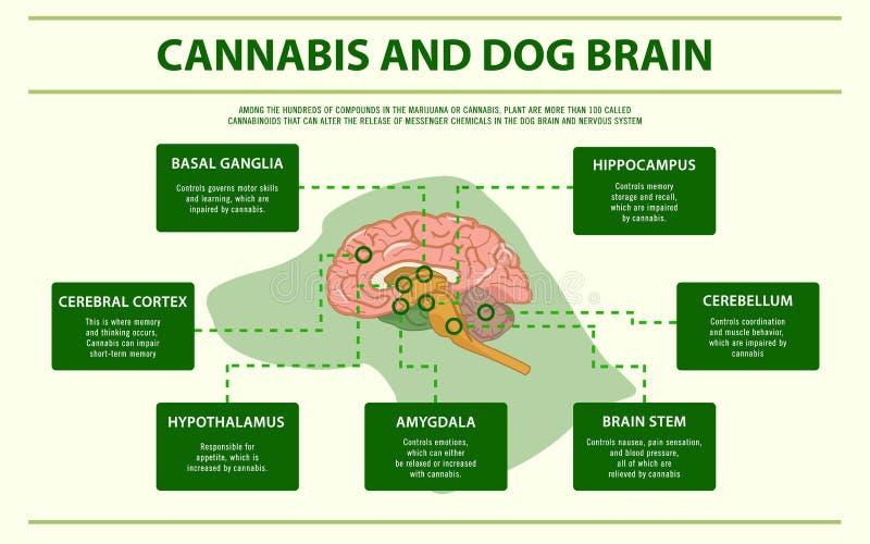 Orizzontale del cervello del cane e della cannabis infographic royalty illustrazione gratis