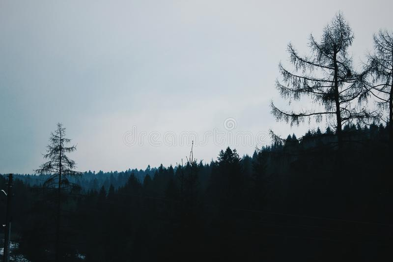 Orizzonte della foresta in montagne immagini stock libere da diritti