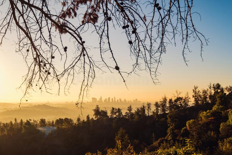 Orizzonte di Los Angeles ad alba con gli alberi in priorità alta, California immagini stock libere da diritti