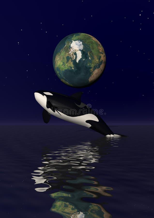 Download Orka ilustracji. Ilustracja złożonej z juana, przód, waleń - 28971441