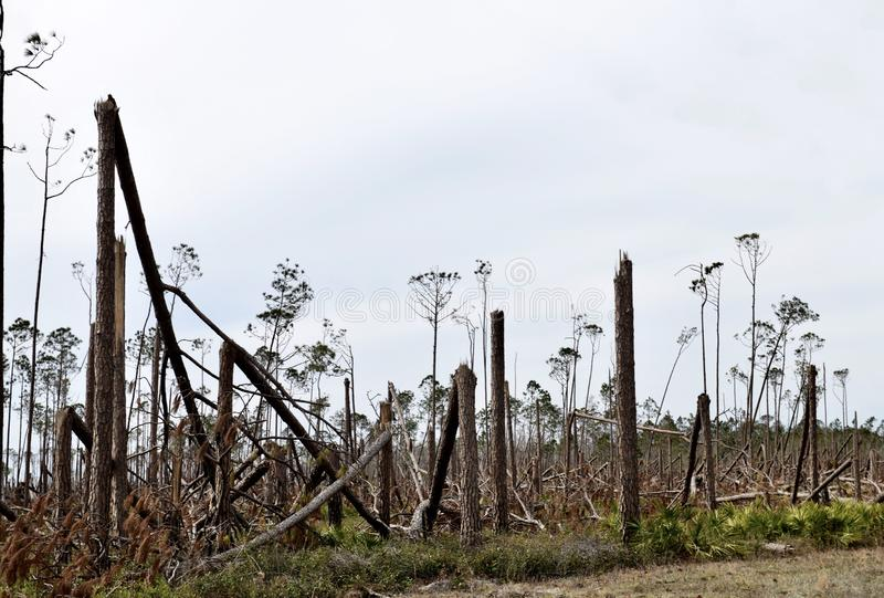 Orkaan Michael Tree Damage #1 stock foto's