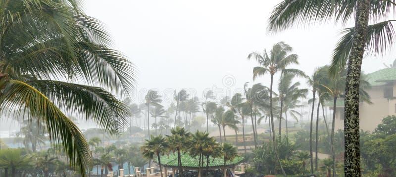 Orkaanwinden en stortbui met palmen stock fotografie