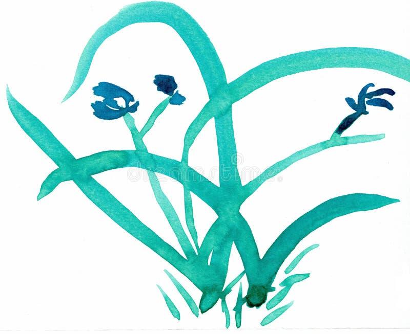 Orkidé - en av de fyra gentlemännen - färgpulverteckning vektor illustrationer