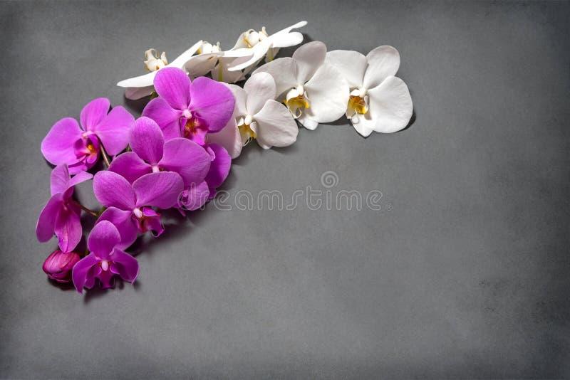 Orkidé En filial av vita och rosa orkidér på en grå bakgrund inflorescence bukett royaltyfri bild
