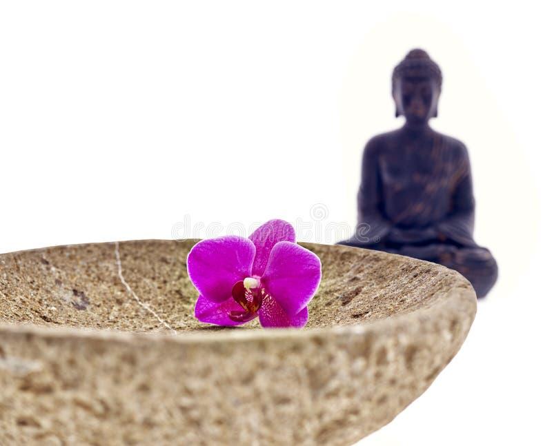 Orkidé för Buddhabunkeblomma arkivfoto