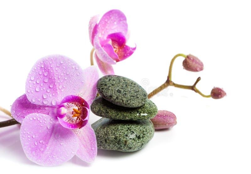 Orkidé- och brunnsortstenar på en vit bakgrund Den härliga rosa färgen blommar på en filial fotografering för bildbyråer