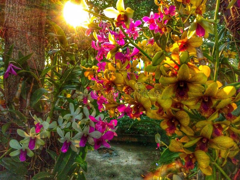 Orkidé och solnedgång arkivbild