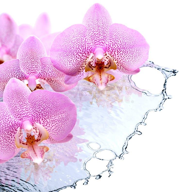 Orkidé och vatten royaltyfria foton