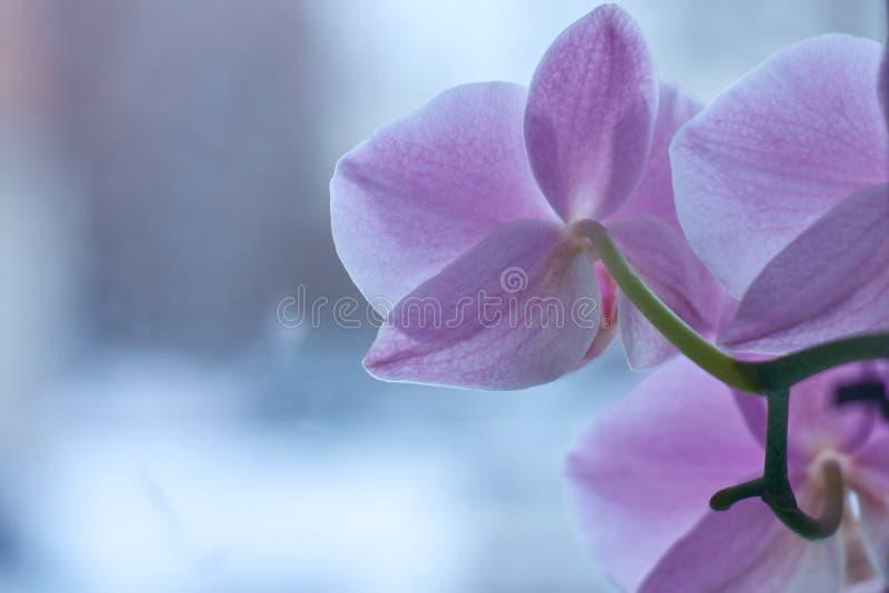Orkidéblomma i trädgården på en vinter eller en vårdag för en skönhetbegreppsdesign och en åkerbruk idé för vykort Orkidé royaltyfri bild