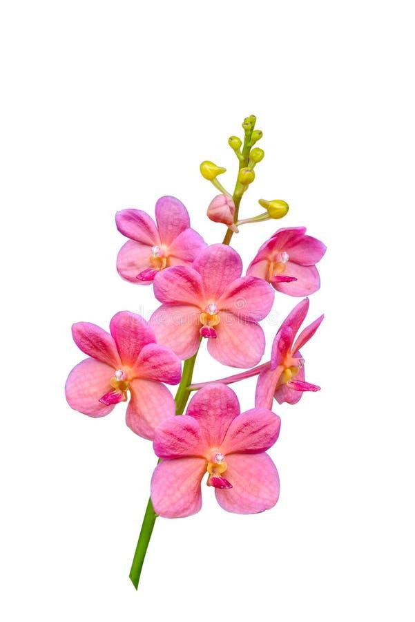 Orkidéblomma i tropisk trädgård royaltyfria bilder