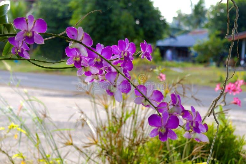 Orkidéblomma med bacground royaltyfria bilder