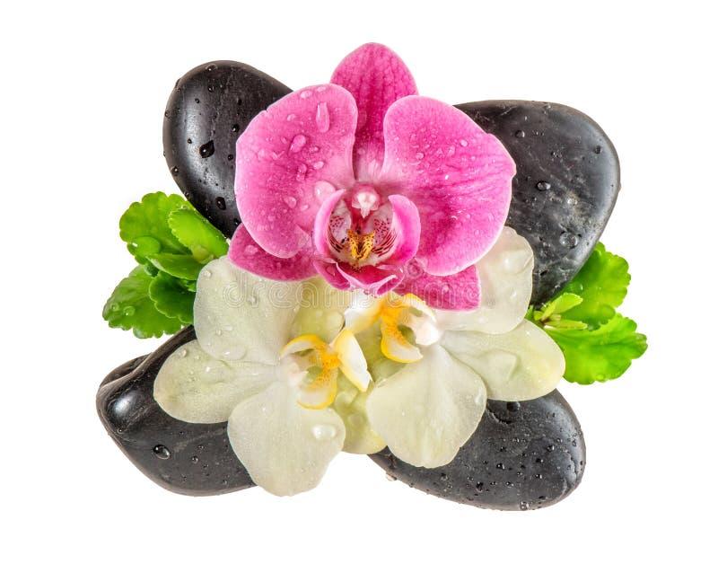 Orkidéblomma med vattendropp- och svartstenar fotografering för bildbyråer