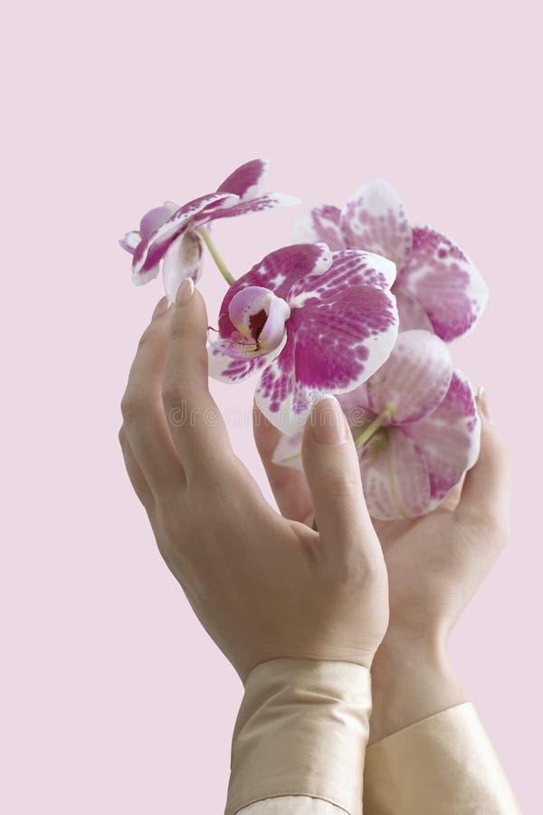 Orkidéblomma och händer royaltyfri fotografi