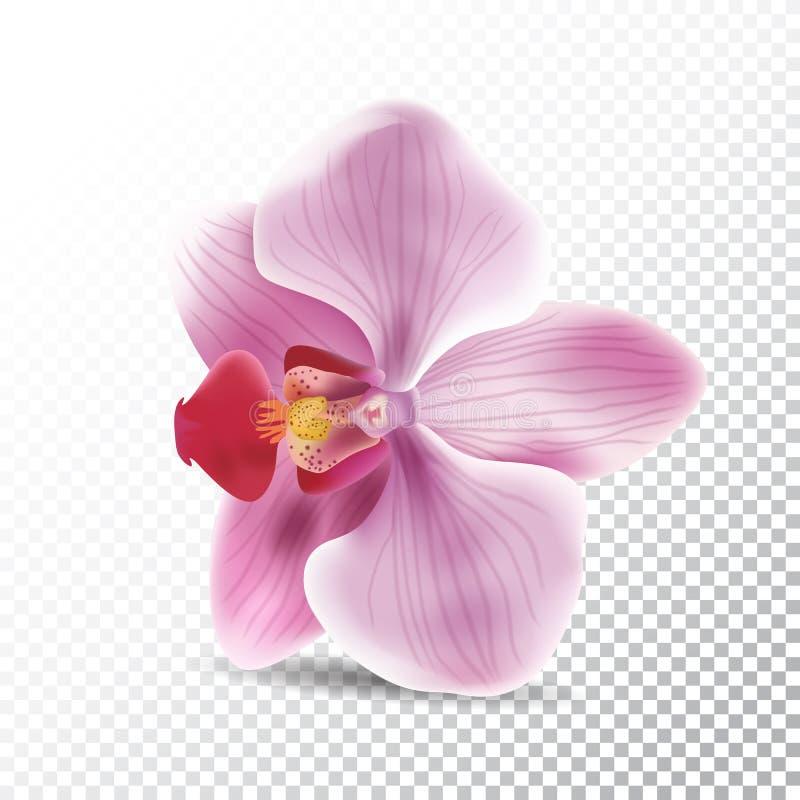 Orkidéblomma som isoleras på genomskinlig bakgrund Realistisk illustration för vektor av orkidérosa färgblomman stock illustrationer