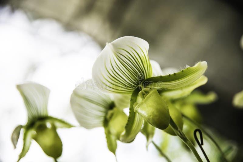 Orkidéblommablom med den mjuka fokusen royaltyfria foton
