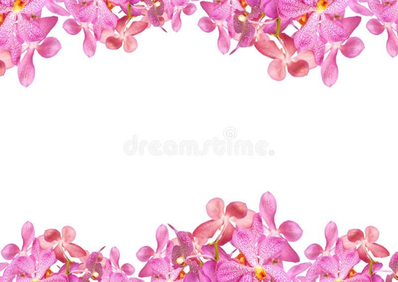 Orkidéblommagräns royaltyfri fotografi