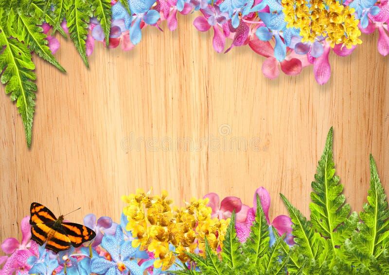 Orkidéblommagräns royaltyfria foton