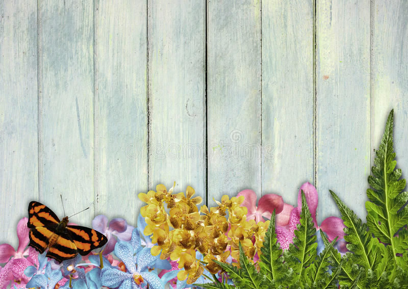 Orkidéblommagräns royaltyfri foto