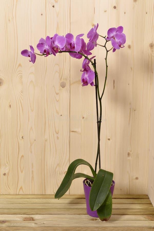 Orkidéblommor Arkivfoto
