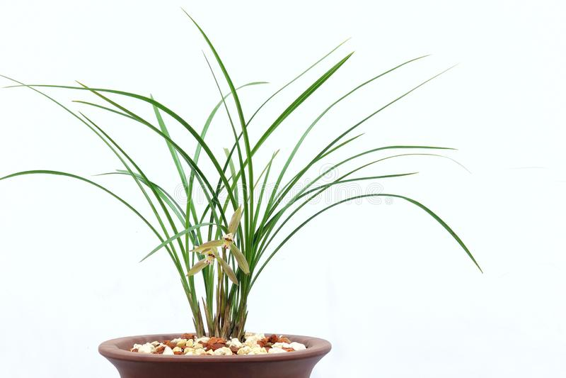 Orkidéblommor och sidor fotografering för bildbyråer