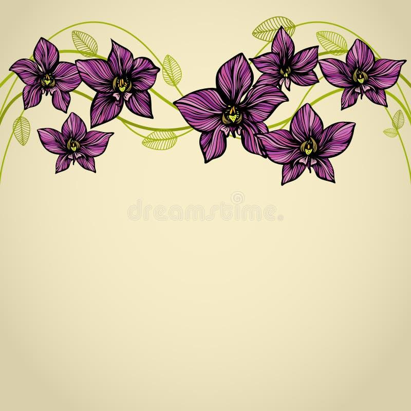 Orkidégräns vektor illustrationer