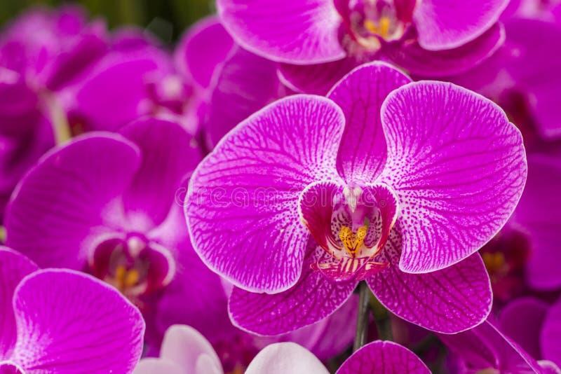 Orkidén är välkänd för de många strukturella variationerna i deras blommor arkivfoton