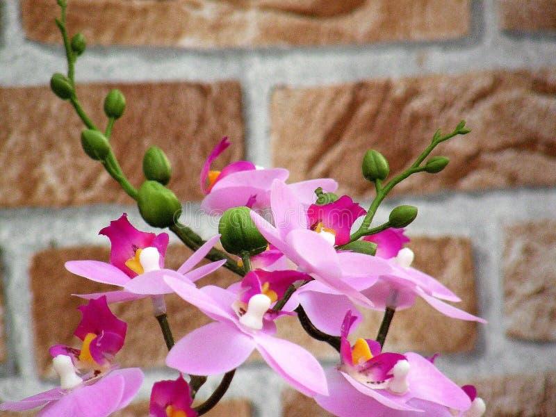 Orkidén med rosa färger blommar tätt upp arkivfoto